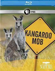 Nature:Kangaroo Mob - (Region A Import Blu-ray Disc)