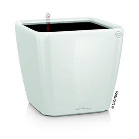 Lechuza - Quadro Premium 21 LS - White Glossy